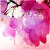 shinigami_kiss userpic