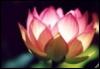 flowerbud2