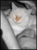 kittytao userpic