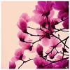 dreamsinxcolour userpic