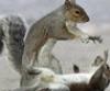 Jess Hart: Squirrel Voodoo