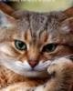 jysya: кот