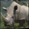 Afrika-Rhino