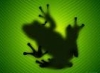 shadowfrog