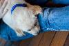 jeans, blue, puppy, Yanda