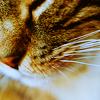 gallifaerie: Animals - Cat Corner
