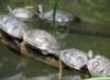 turtletrails userpic