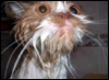 wet cat, silly