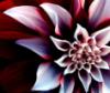 angelmelika2 userpic