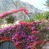 caitidid19: Capri