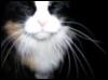 Cat - Buggsy