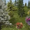 trees and flowers 1