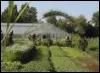 xdaylily userpic