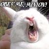 PlotBunny: Obey me minion!