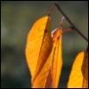 earrame1221 userpic