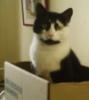 Me in my favourite cardboard castle