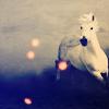horse:run
