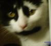 frankie cat