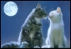 cats under moon