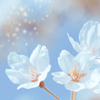 Malak: flowers