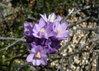 alan - spring flowers