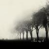 Солнечный Лев: туманные деревья