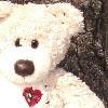 Jocobear heart