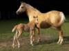asturcon_horse userpic