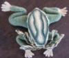frog needle case