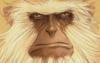 monkey, ranting