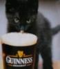 GuinnessCat