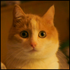 Шокированный Кот