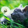 felinefancy userpic