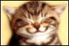 smirkingcat userpic