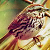 ellen: bird