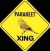 kippurbird