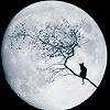 Anpliça mka Rachel: moonycat