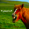 Yawn - Horse