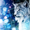 The Lynx Of Ice