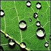leaf-dew