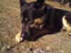 Собакин Другх: фото № 5