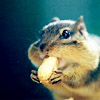 NUTS! IN YOUR MOUTH!