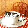 cats - teacup