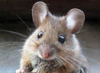 mouse_mom userpic