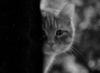 bez_dushno userpic