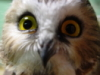littlebrownowl userpic