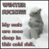 squirrel winter-sux