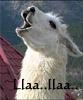 Llama Song