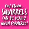 wow squirrels