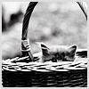 Stock_catinbasket